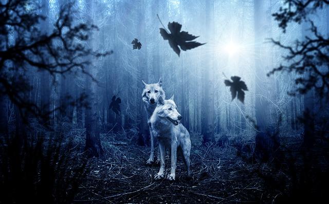 vlci v lese